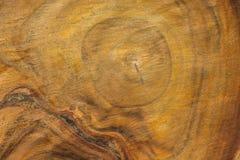 L'albero che ha tagliato, alla mobilia Immagini Stock Libere da Diritti