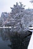 L'albero che pende sopra il lago ha sanguinato, alpi slovene Fotografia Stock Libera da Diritti
