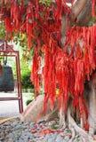 L'albero cinese dei soldi Fotografie Stock Libere da Diritti