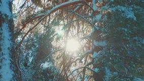 L'albero completa il paesaggio dell'inverno di abbagliamento di luce solare del ramo della neve del pino del cielo blu dell'inver stock footage