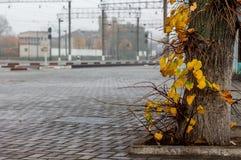 L'albero con giallo va contro lo sfondo del treno immediatamente Fotografia Stock Libera da Diritti