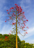 l'albero con i fiori rossi nel cielo è il contesto Immagine Stock Libera da Diritti