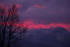 L'albero con sangue gradisce il cielo della montagna Fotografie Stock Libere da Diritti