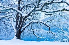 L'albero coperto di neve durante l'inverno nel lago ha sanguinato in alpi slovene Fotografia Stock