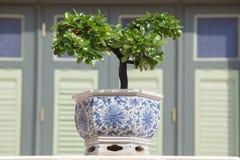 L'albero dei bonsai del ginepro nel giardino immagini stock