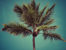 L'albero del cocco Fotografia Stock Libera da Diritti