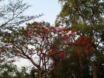 L'albero del fiore Immagine Stock