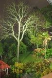 L'albero del fulmine Immagini Stock