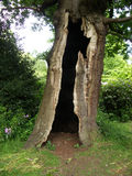 L'albero del lampo Immagine Stock