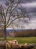 L'albero del taglio collega un parco fotografie stock libere da diritti