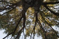 L'albero del in tensione immagine stock libera da diritti