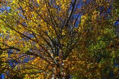 L'albero dell'autunno Fotografia Stock Libera da Diritti