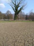 L'albero dell'eroe Fotografie Stock Libere da Diritti