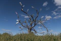 L'albero della bottiglia di acqua Immagini Stock