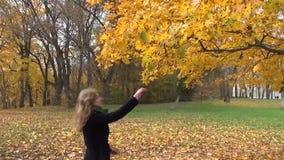 L'albero della donna lascia il ramo video d archivio
