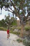L'albero della scarpa! Immagine Stock Libera da Diritti