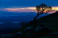 L'albero della siluetta sull'alta montagna Fotografia Stock Libera da Diritti