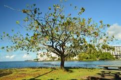 L'albero della vita in Hawai Immagini Stock Libere da Diritti