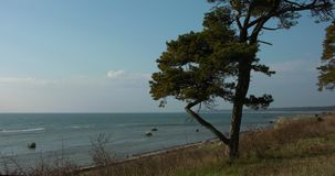 L'albero di abete solo su una riva di erba marrone, lenente ondeggia arrivar a fiumie