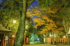 L'albero di acero e il Yasaka storico shrine alla notte fotografia stock libera da diritti