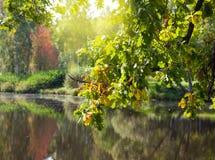 L'albero di autunno con fogliame luminoso è riflesso nel lago Fotografia Stock