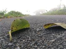 L'albero di banyan lascia il bloccaggio vicino fotografia stock