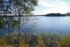 L'albero di betulla dal lago nelle canne sotto il cielo fotografie stock