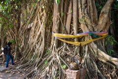 L'albero di Bodhi è molto grande Immagini Stock Libere da Diritti