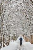 L'albero di inverno in neve dalla Russia Immagini Stock Libere da Diritti