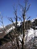 L'albero di Leafles con neve ha ricoperto la montagna nei precedenti Fotografia Stock