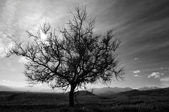 L'albero di loneley Fotografie Stock
