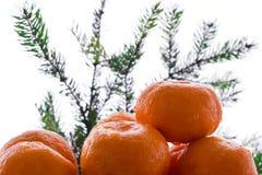 L'albero di Natale della composizione nel nuovo anno si ramifica e mandarino arancio Fotografie Stock Libere da Diritti