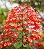 L'albero di Natale gradisce i fiori immagini stock libere da diritti