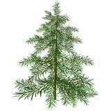L'albero di Natale verde Fotografia Stock Libera da Diritti