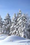 L'albero di pino innevato Fotografie Stock Libere da Diritti