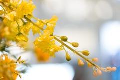 L'albero di pioggia dorata, questo è fiori di plastica da decorare Fotografia Stock Libera da Diritti