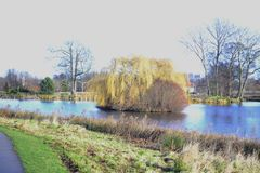 L'albero di salice e l'altro boschetto su un'acqua hanno circondato l'isola fotografie stock