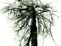 L'albero di Tetric Fotografie Stock