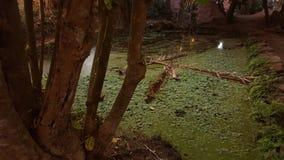 L'albero e geen il alge dell'acqua Immagine Stock Libera da Diritti