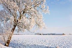 L'albero e l'azienda agricola in inverno bianco modific il terrenoare Immagine Stock