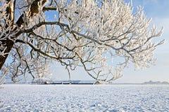L'albero e l'azienda agricola in inverno bianco modific il terrenoare Fotografie Stock