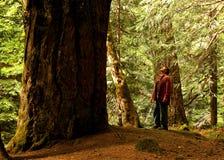 L'albero e la I Fotografie Stock Libere da Diritti