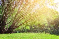 L'albero e la luce solare del landscapse in parco Fotografia Stock
