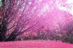 L'albero e la luce solare del landscapse in parco Fotografie Stock Libere da Diritti