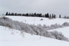 L'albero e la neve Fotografia Stock Libera da Diritti