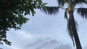 L'albero e la palma del frangipane di plumeria nel balinese fanno il giardinaggio Isola tropicale di Bali, Indonesia archivi video