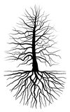 L'albero e la radice Fotografia Stock