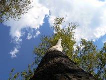 L'albero e potrebbe Fotografia Stock Libera da Diritti