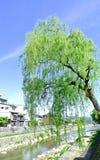 L'albero ed il fiume Fotografia Stock