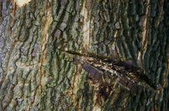 L'albero ferisce la struttura Fotografia Stock